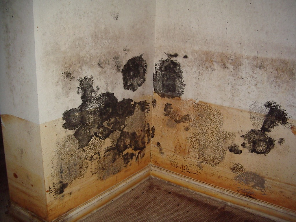 laguna niguel mold repair