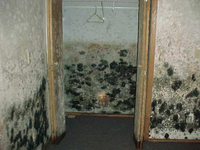 mold remediation orange, CA