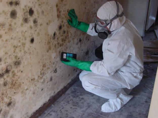 Fullerton Mold Removal Company