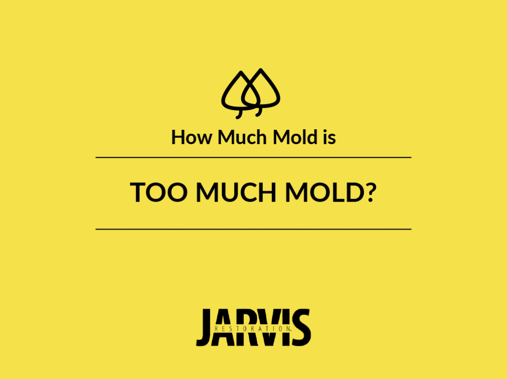 how much mold is too much mold