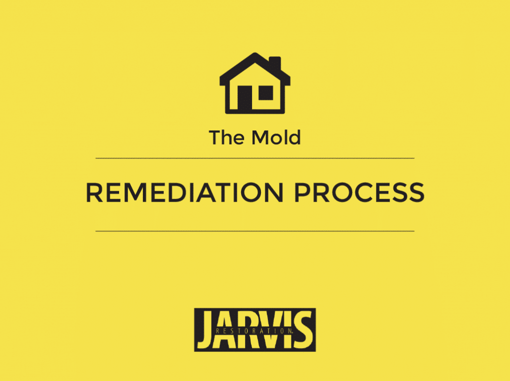 The_Mold_Remediation_Process